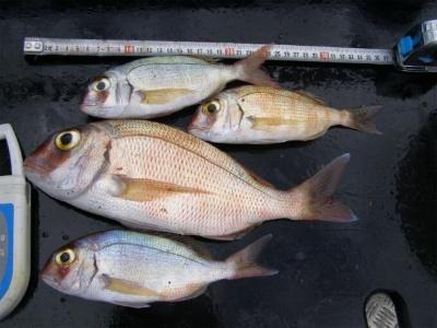 tamaño-del-pescado