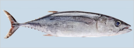 la-pesca