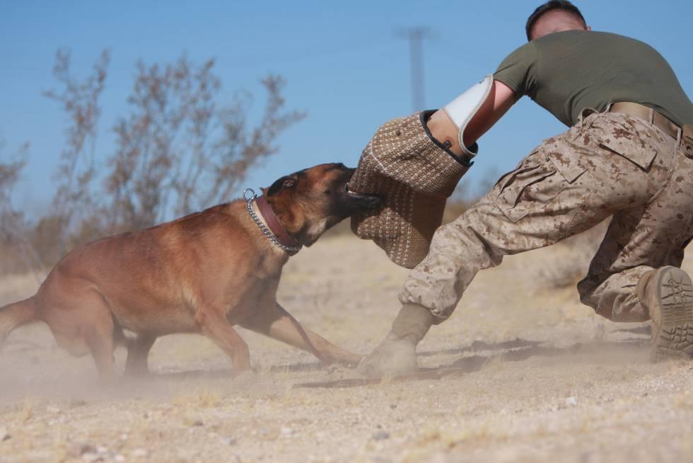 curso-para-adiestrar-perro