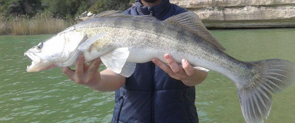 pescar-en-el-ebro