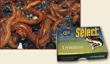 gusano-del-norte-tremolina