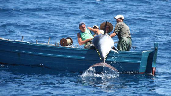 pesca-del-atun-rojo