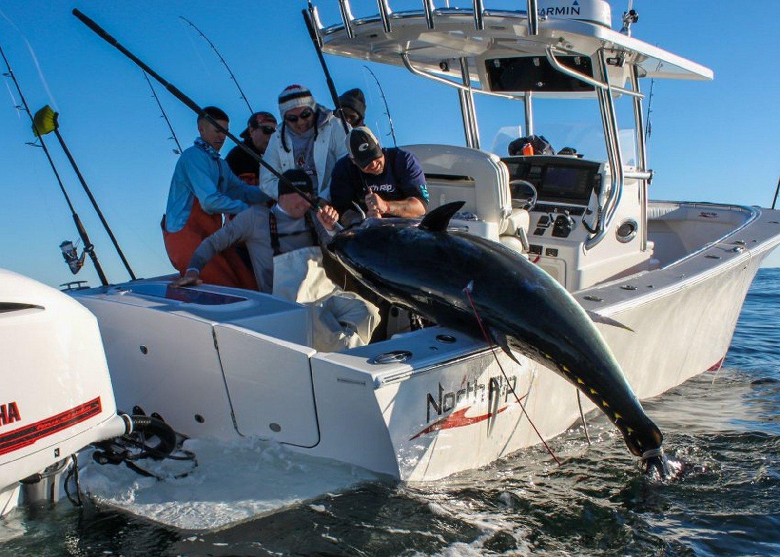 pescar-un-atún-rojo