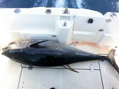 un-atún-de-dos-metros